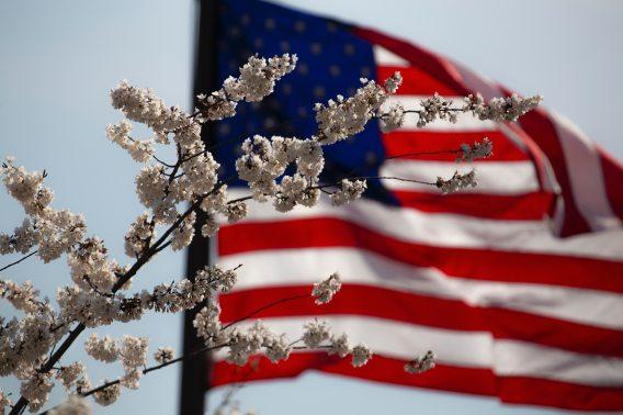 american-flag-flag-flower-1093645
